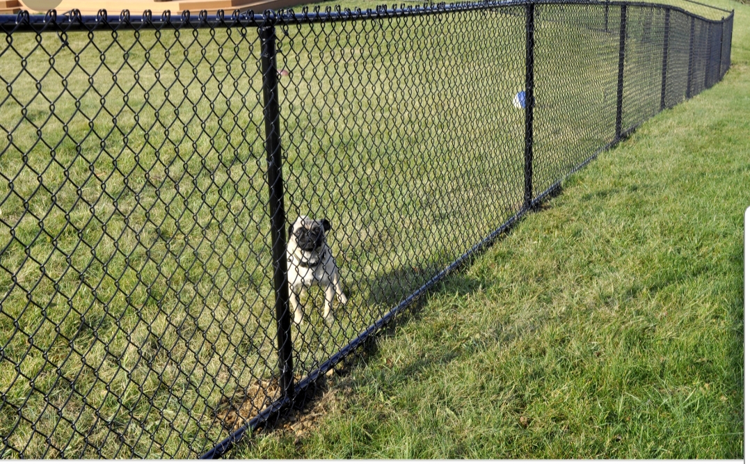 Chain Link Fence Builders in Tallahassee FL